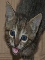 cat_7857_resize